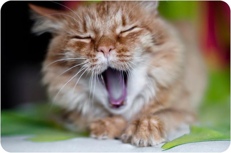 Кот добрый рыжий
