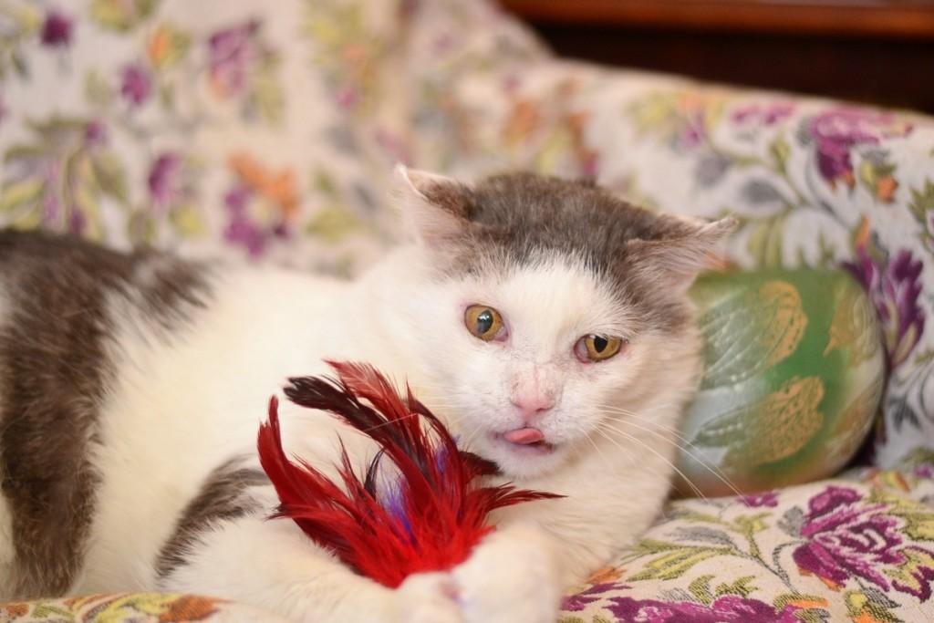 Сонник Подарили котенка. К чему снится Подарили котенка видеть во сне