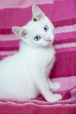 Ленни - голубоглазый очаровашка