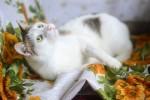 Мишель ласковый - солнечный мальчик