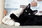 Паучок - черненький котенок