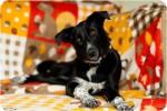 Сонечка Ильянская - собака для души!