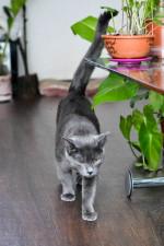 Талер - ценный котик