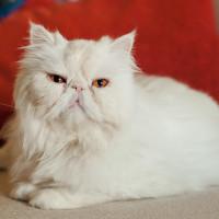 Алиса Горецкая - экзотическая блондинка