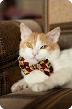 Робин рыжий - настоящий Кот для настоящих ценителей