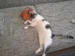 Димка - симпатичный молодой котик