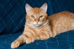 Бискай - котик для души