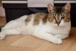 Мачо - чудом спасенный молодой котик