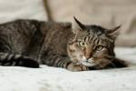 Софи Лорэн - тигровая красота-милота!