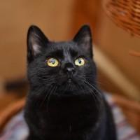 Натан - маленький черно-плюшевый котофан