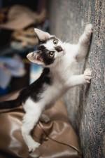 Альпинист - маленький юркий хитрюга