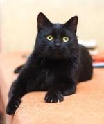 Мишка Алтайский - настоящий чудо-кот