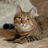 Полина Одоевская - тигровая бусяка!