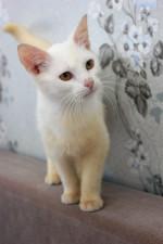 Жозефина Вудс - белоснежная кошечка ищет дом.