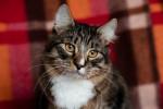 Ленар - роскошный котик