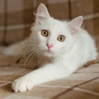 Ромка Плеханов - блондин с кокетливыми завитушками