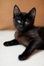 Нига - сладкая чернушечка