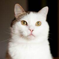 Оливка Малиновская - хорошая кошечка