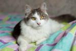 Митос - очаровательный котя