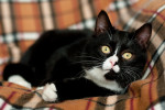 Идрис - очаровательный котя