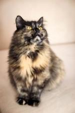 Мартишора - не кошка - прелесть)