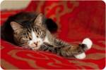 Кантуччи - сладкая и шустрая котомоська в дар!