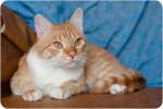 Лари Мур - замурчательный котик