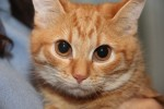 Солана - рыжая кошечка