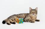 Мурка чудесная - молоденькая тигровая кошечка