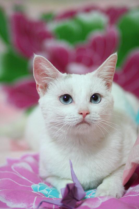 адвокат от глистов для кошек