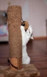 Ляля Ангарская - миниатюрная ласковая кошечка в дар