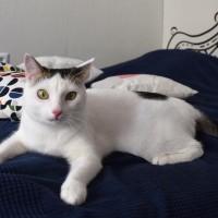 Вовочка - анекдотический котенок!