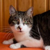 Артурчик - классный кот, прикольный нос!