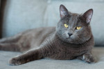 Рэдисон - престижный кот