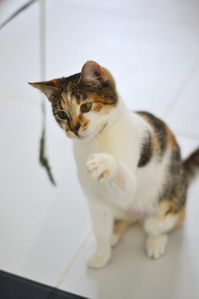 уколы от глистов котятам